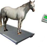tehtnica za konje